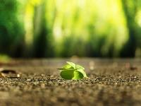 four-leaf-clover-3336774_1920-1
