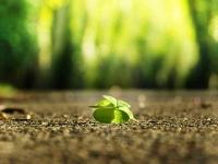 four-leaf-clover-3336774_400-1